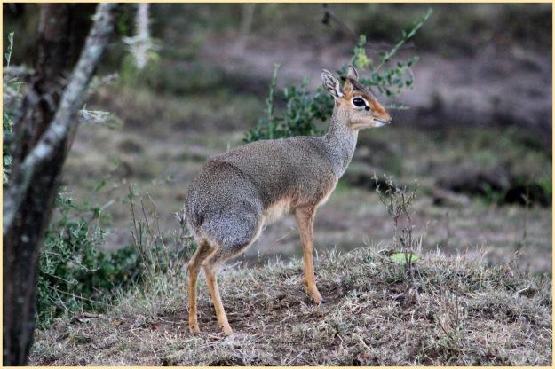 Safari: Part V – In praise of the Antelope | iago80