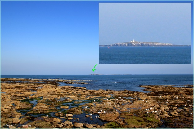 Farne Islands from Seahouses