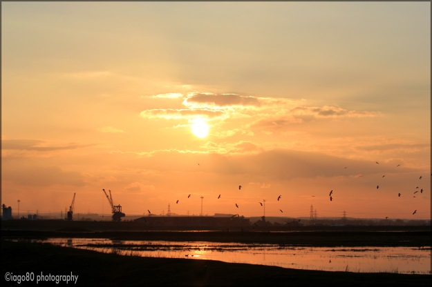 Elmley sunset 2