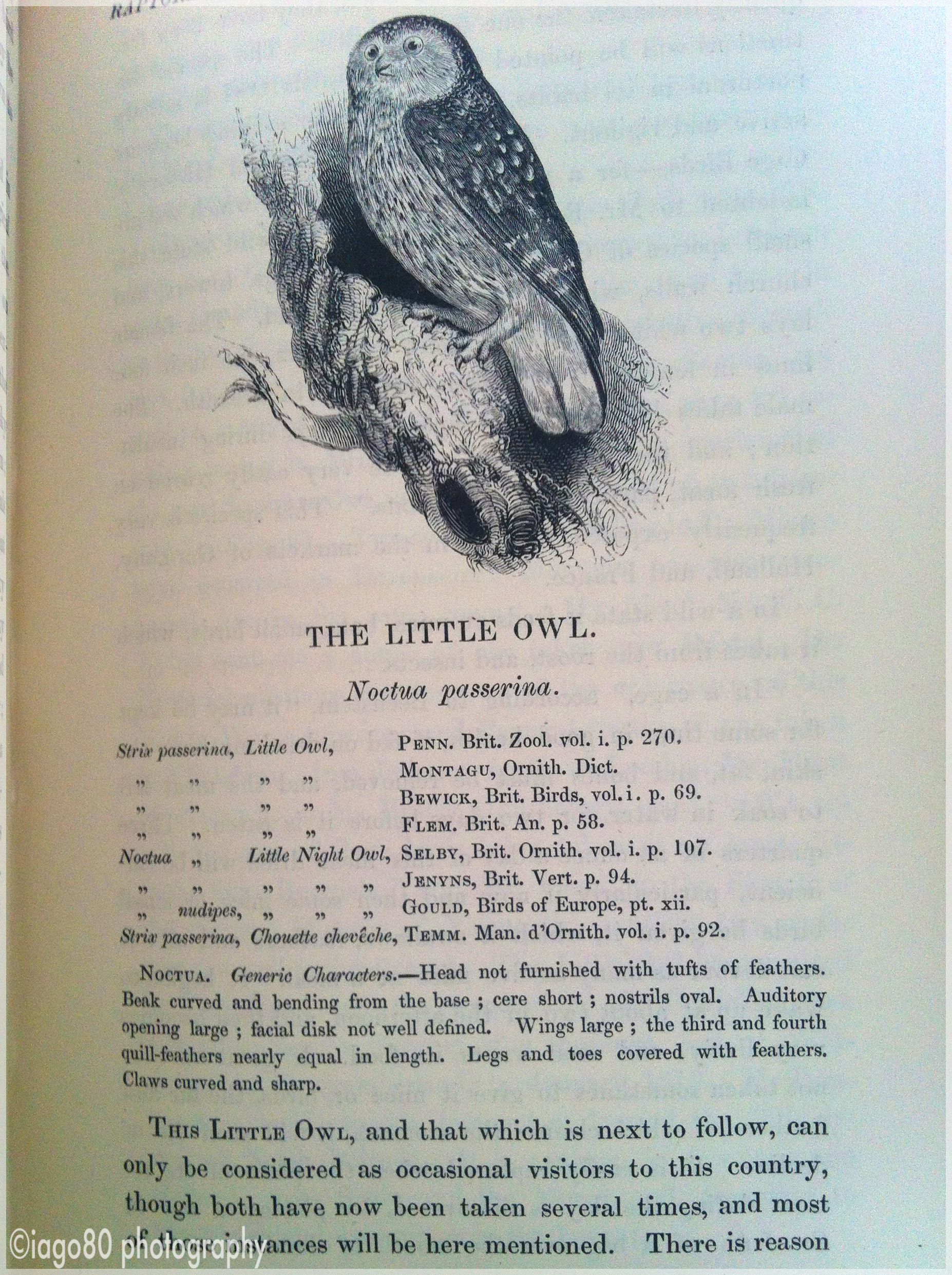 An autobiography of an owl