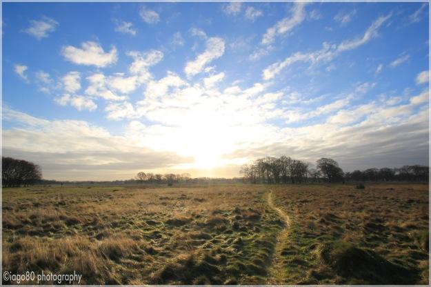 Broom Fields