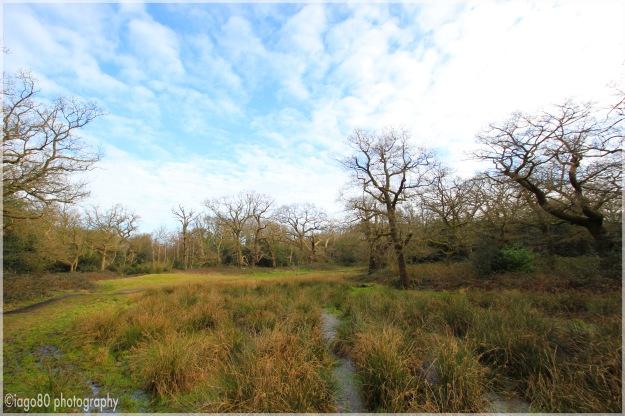 Bush Wood: Point D on map