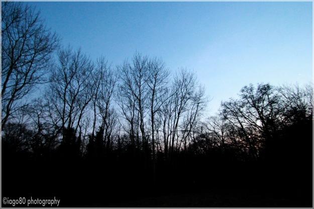 Bush Wood