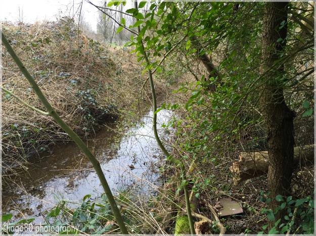Alders Brook