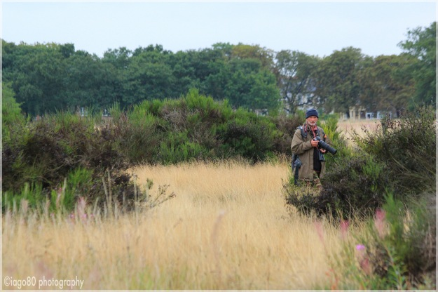 Wryneck hunting