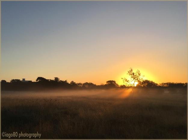 Western Flats at dawn