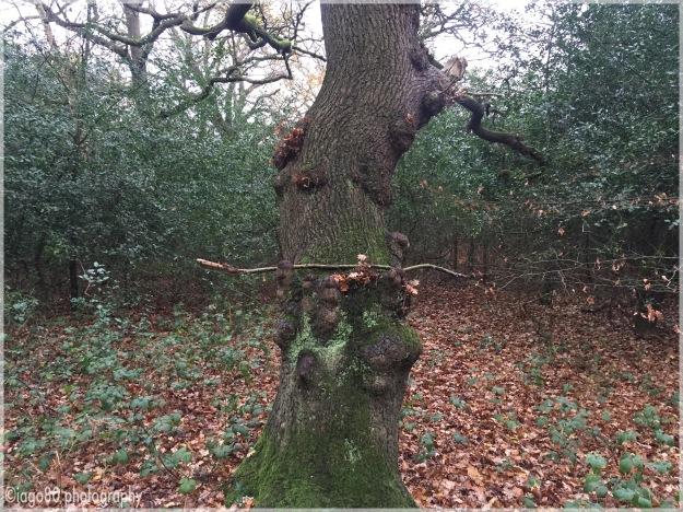 Jono's secret tree