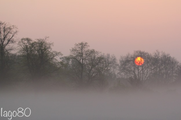 Wanstead Flats at dawn