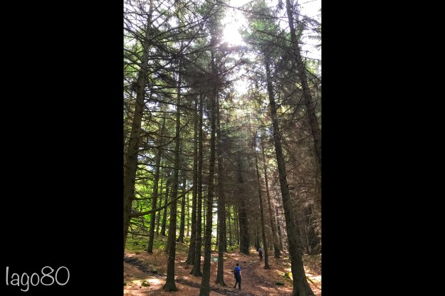Sean and treesv2